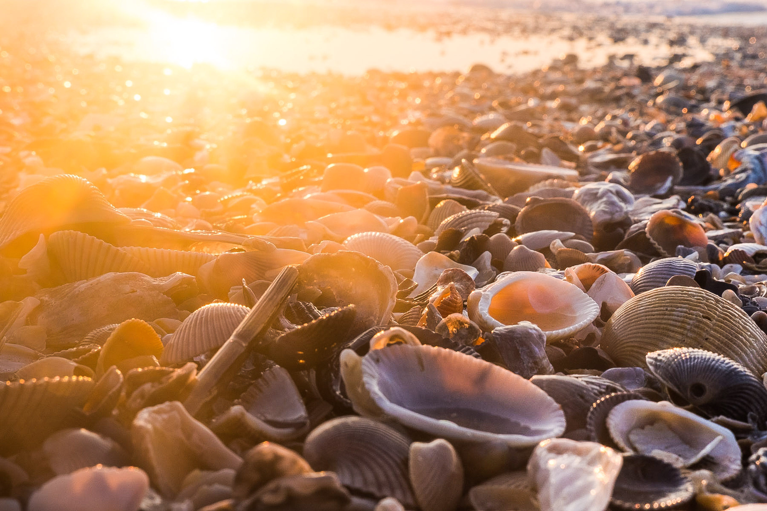 Shells on the beach of Amelia Island at Sunrise by Steven Martine travel and tourism photographer