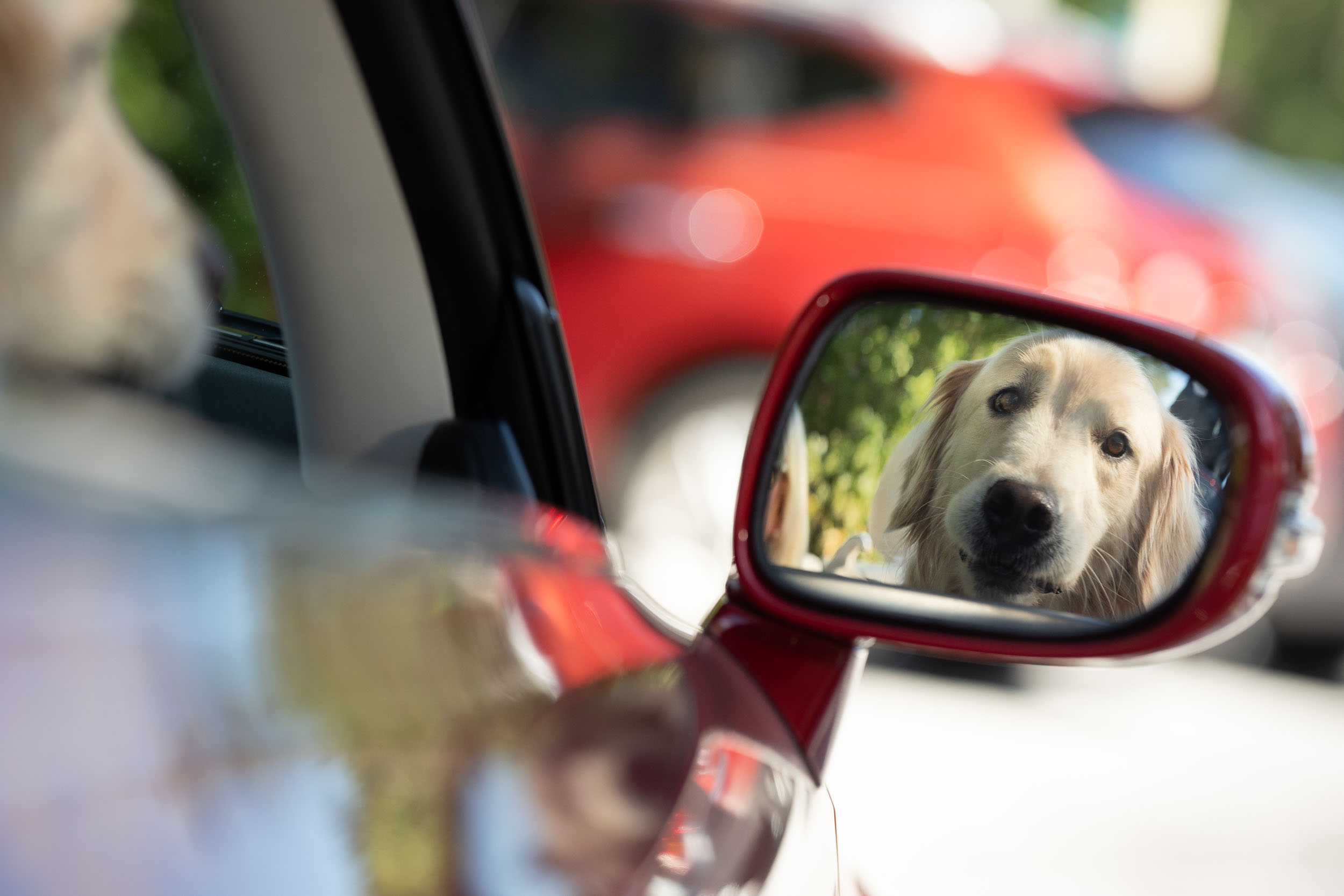 Florida Photography | dog in car mirror | Steven Martine